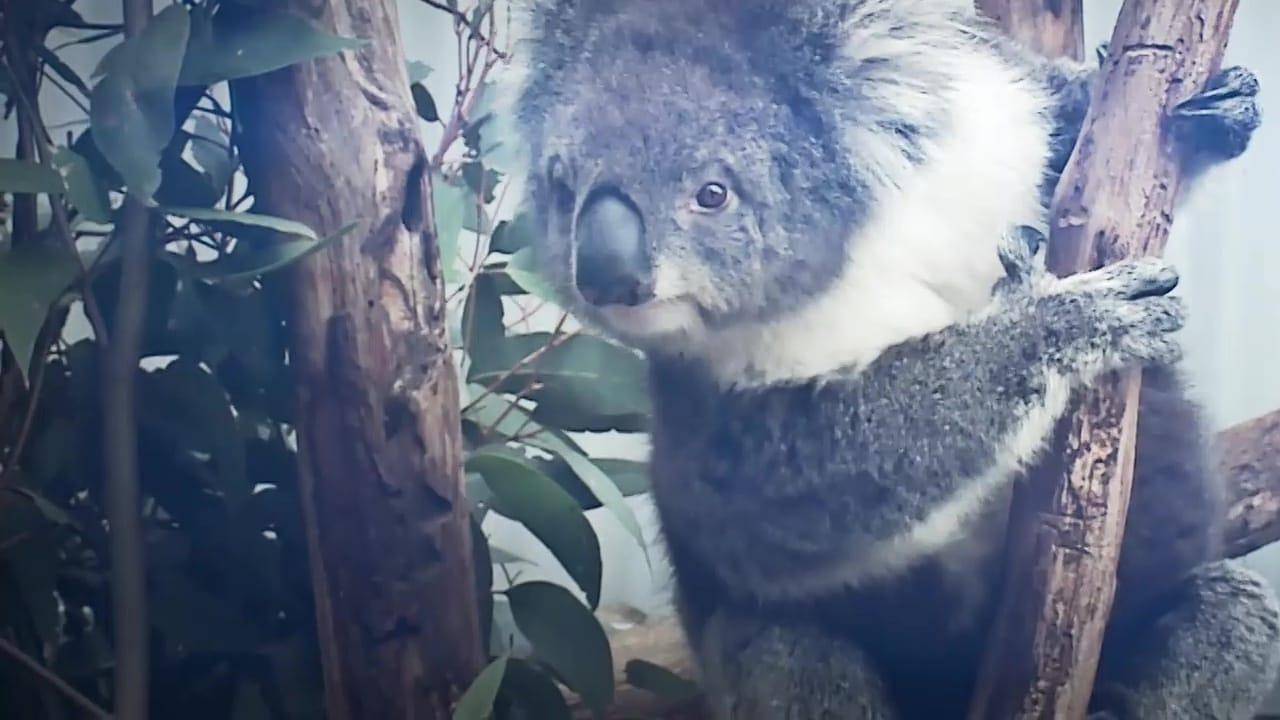 72 Cutest Animals Episode: Fluff and Stuff