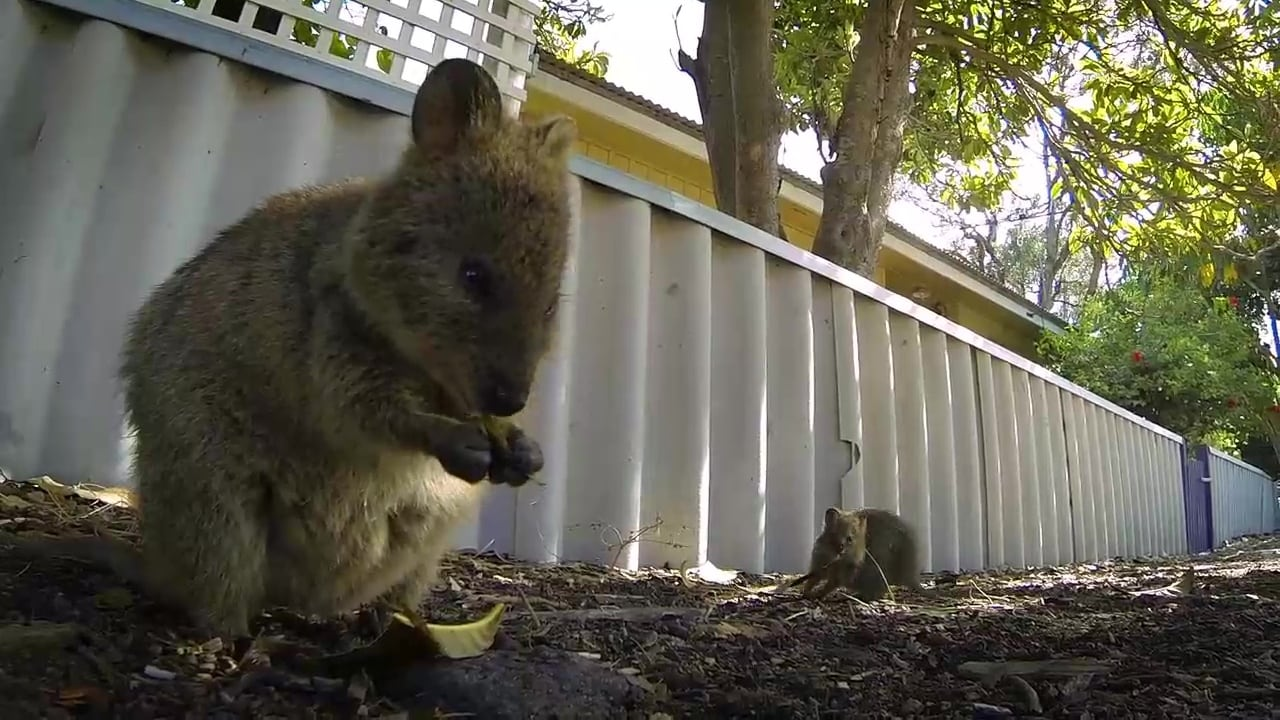 72 Cutest Animals Episode: Bouncing Buddies
