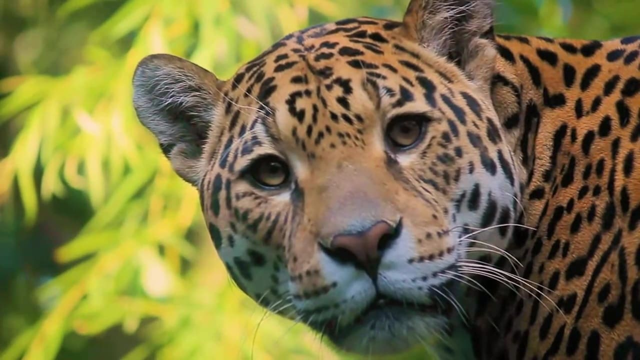 72 Dangerous Animals Latin America Episode: Episode 1