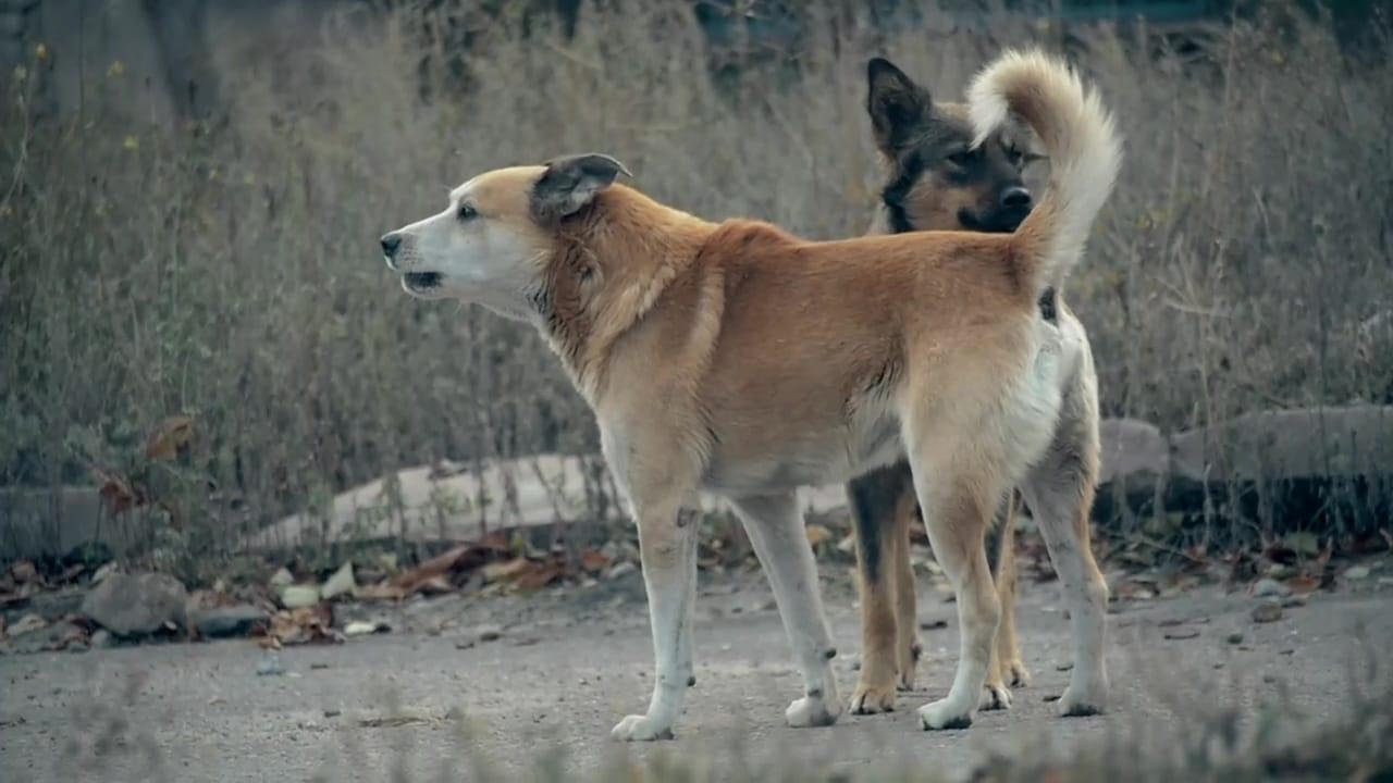 72 Dangerous Animals Latin America Episode: Episode 5