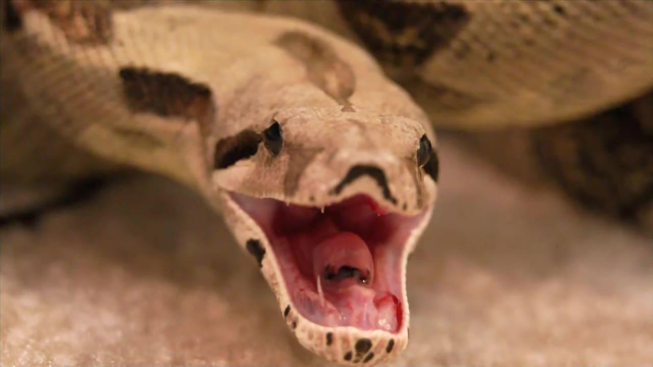 72 Dangerous Animals Latin America Episode: Episode 6