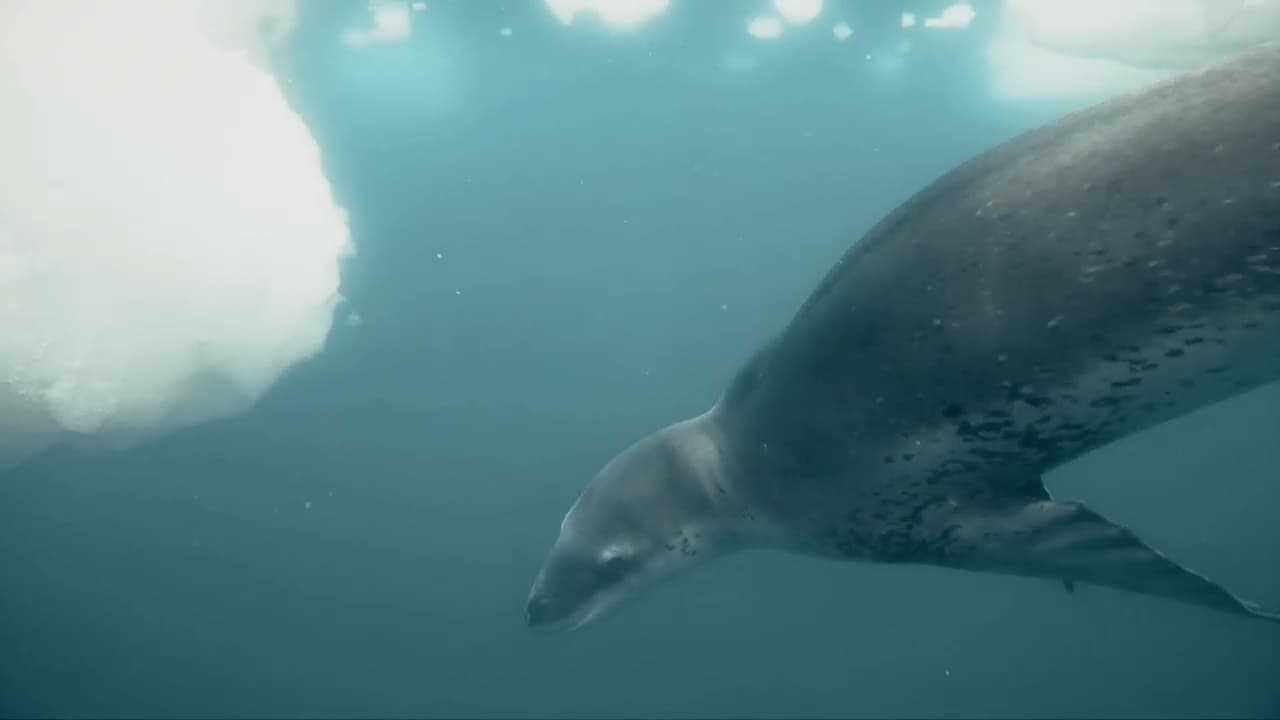 72 Dangerous Animals Latin America Episode: Episode 7