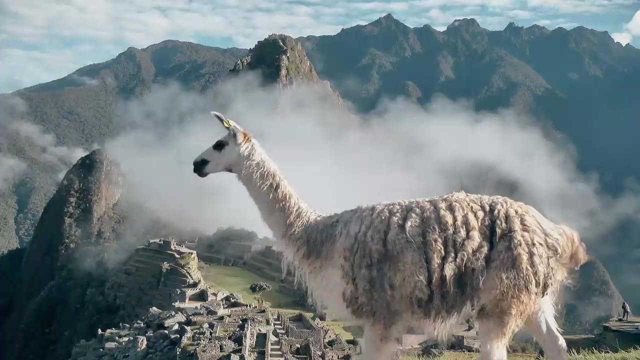 72 Dangerous Animals Latin America Episode: Episode 8
