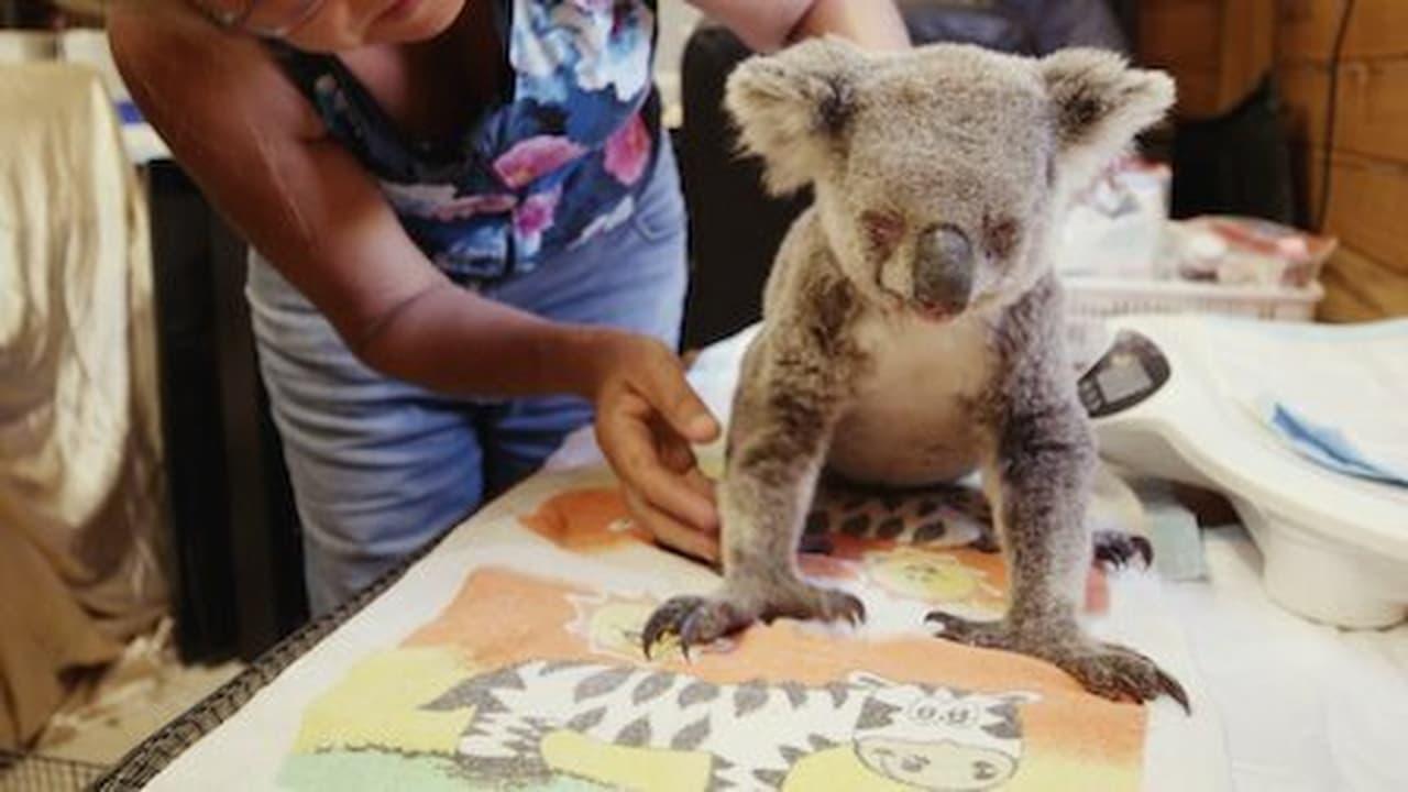 Izzys Koala World Episode: Episode 2