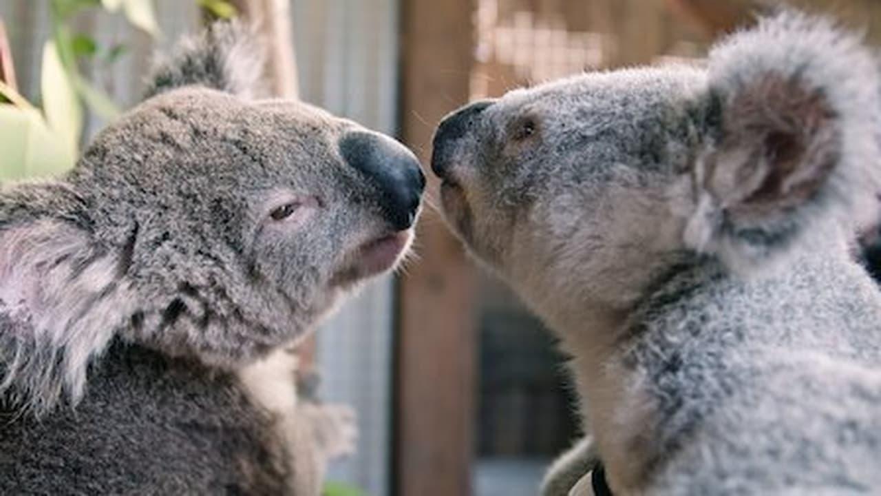 Izzys Koala World Episode: Episode 8