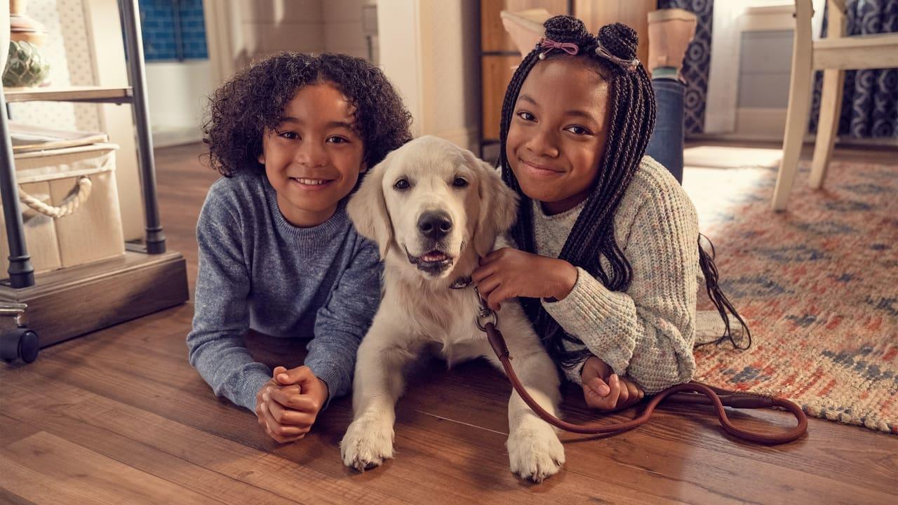 Puppy Place Episode: Goldie