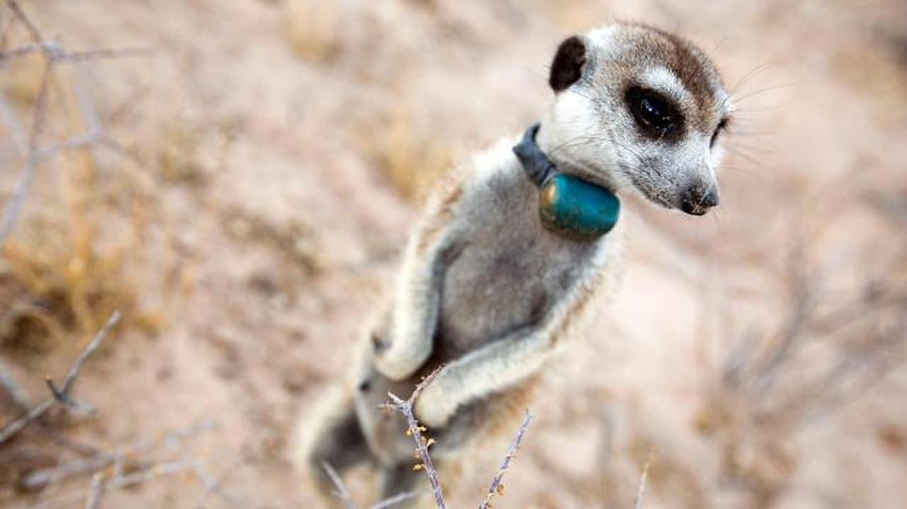 Animals with Cameras Episode: Episode 1