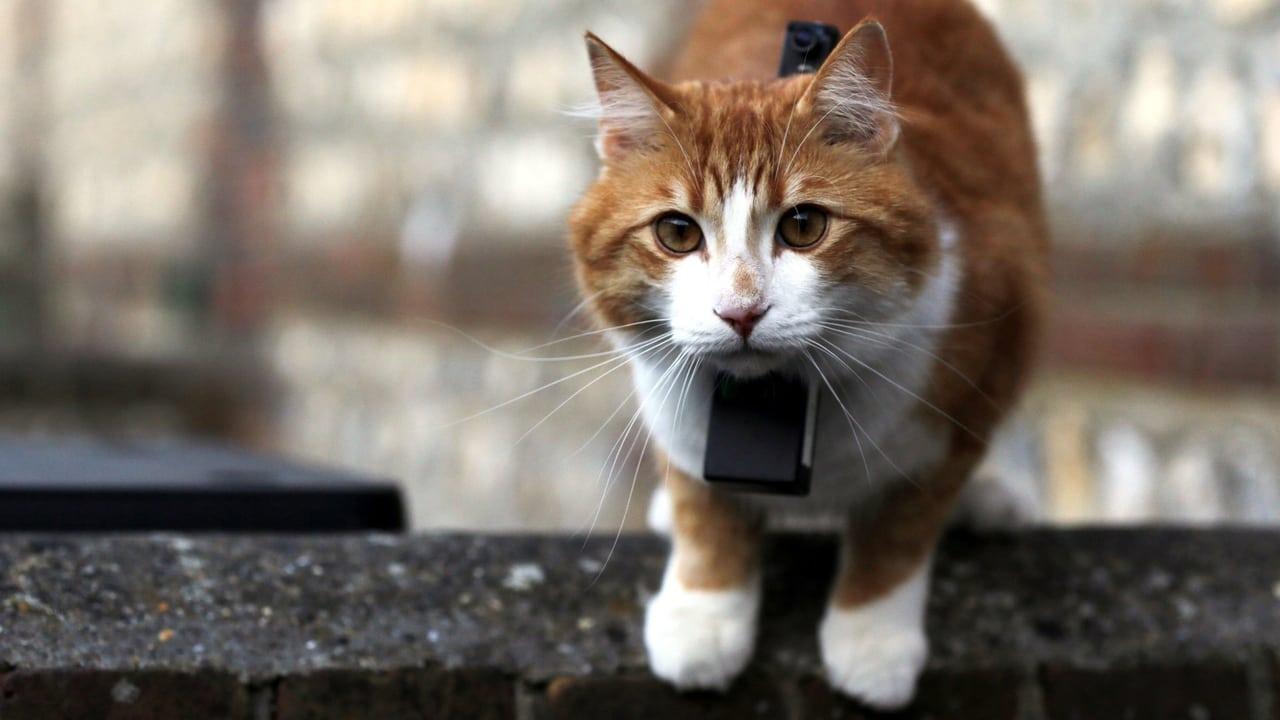 Cat Watch 2014 The New Horizon Experiment Episode: Cat Talk