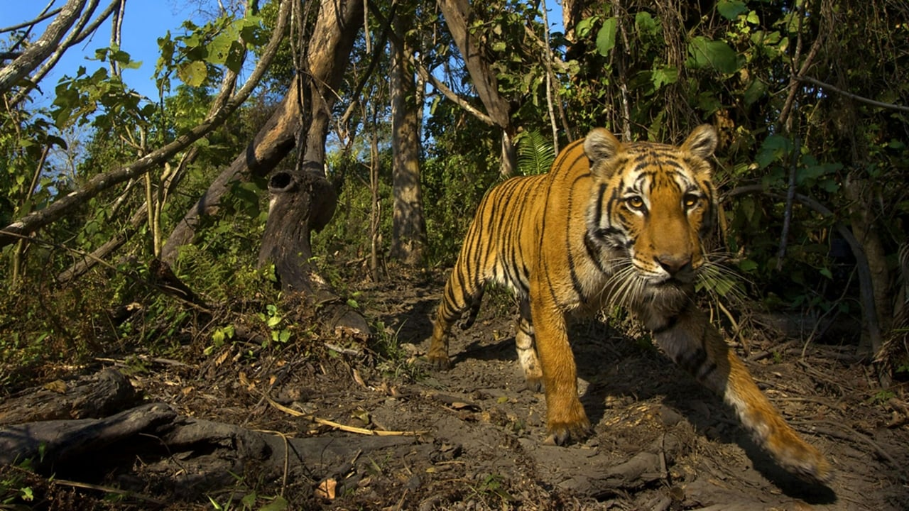 Lost Land of the Tiger Episode: Episode 3