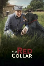 Streaming sources for The Red Collar