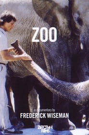 Streaming sources for Zoo