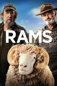 Rams Poster