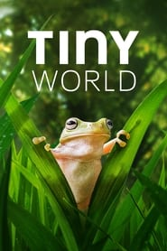 Streaming sources for Tiny World