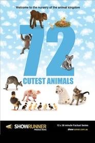 72 Cutest Animals Poster