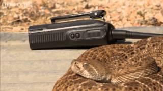 Richard Hammond talks to a rattlesnake  Richard Hammonds Miracles of Nature  BBC One