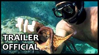 My Octopus Teacher Official Trailer 2020 Documentary Movies Series