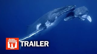 Secrets of the Whales Documentary Series Trailer  Rotten Tomatoes TV