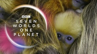 Seven Worlds One Planet Extended Trailer ft Sia and Hans Zimmer  New David Attenborough Series