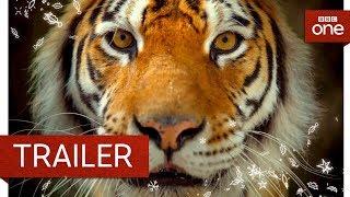 Big Cats Trailer  BBC One