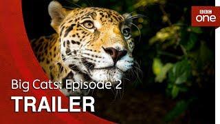 Big Cats Episode 2  Trailer  BBC One